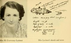 """Curator of the Natural History museum in East London, South Africa, Marjorie Courtenay-Latimer realized that the coelacanth wasn't extinct, but was simply the vile-tasting """"gombessa"""" that had been thrown away for decades. Ancient Fish, African Museum, Institutional Critique, Deep Sea Creatures, Natural History Museum, London Museums, Mystery Of History, Marine Biology, Old Paper"""