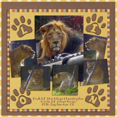 Lions - Scrapbook.com