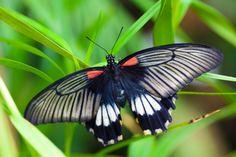 butterflies | Black White Red Butterfly by Petr Kratochvil