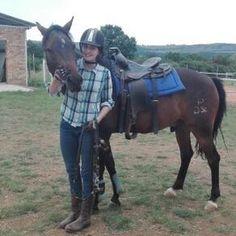 Devondale Abedan - SA Boerperd Gelding. Horses, Animals, Animais, Animales, Animaux, Animal, Horse, Dieren