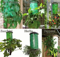 Topsy Turvy Upside Down Tomato, Flower and Vegetable Planter