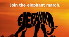 Elephants are at risk of extinction-unless we 'say no to ivory!...Join the march for these beautiful animals!
