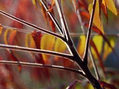 klaura / jeseň 2