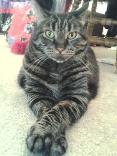 My cat Claudia Sue. Shana, Milwaukee, WI. 11/24/12.