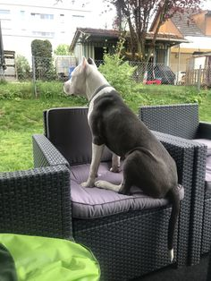 My pitbull ❤️ Pitbull Bull Terrier, Bull Terriers, Boston Terrier, Creative Instagram Stories, Instagram Story, Bully Breed, Awesome Dogs, Pit Bulls, Doberman