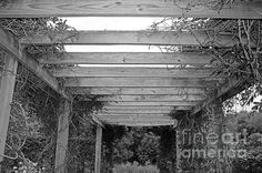 wood, pergola, black, white, vine, nature, michiale schneider photography, interior design, framed art, wall art