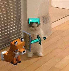 Gato Minecraft, Minecraft Memes, Cute Profile Pictures, Funny Pictures, Cute Funny Animals, Cute Cats, Cat Memes, Funny Memes, Gato Anime