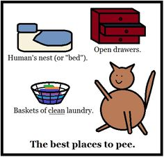 The best places to pee.  #cats