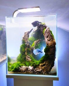 Aquarium Betta, Aquarium Nano, Aquarium Design, Aquariums Super, Amazing Aquariums, Tanked Aquariums, Fish Tank Terrarium, Aquarium Terrarium, Garden Terrarium