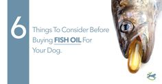 You might think your dog is getting omega-3 from his food. But her might not be. Find out why and what to know before giving him supplements and fish oils!