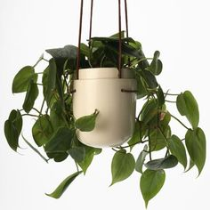 Check out the Perch Plant Pod in Hanging Planters, Pots & Planters from Perch! Design for Outdoor Planters, Hanging Planters, Planter Pots, White Planters, Belle Plante, Diy Inspiration, Bedroom Inspiration, Cool Plants, Winter Garden
