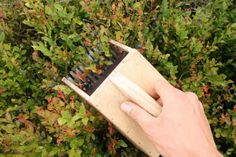DIY Berry Picker - allows you to pick more berries than you would hand picking... #diy #foraging