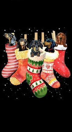 Christmas Christmas Scenes, Christmas Animals, Christmas Dog, Christmas Wishes, Christmas Humor, Dachshund Breed, Funny Dachshund, Dachshund Puppies, Dachshund Love