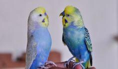 https://www.facebook.com/plabon.eilte.birds/photos/a.1788168878162481.1073741828.1787495938229775/1858336817812353/?type=3