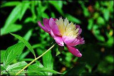 동양의 꽃에 대한 이미지 검색결과