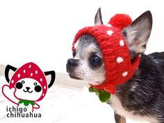 【楽天市場】【チワワ 帽子】イチゴチワワのニット帽【チワワ 小型犬 ペット ニット帽 コスプレ いちご】:チワワ専門店スキップドッグ!