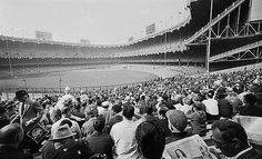 Shea Stadium, Yankee Stadium, Nyc Pics, New York City Guide, Baseball Park, New York Yankees, Old Pictures, Dolores Park