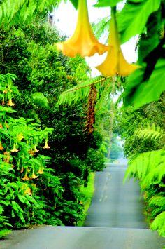 Volcano Road in Hawaii Volcanoes National Park.  http://www.perfectdayshawaii.com/big-island-hawaii-volcanoes-national-park/#.UMtoIY7Rf8s