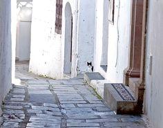 un #chat dans les rues de Lindos à Rhodes, #Grèce