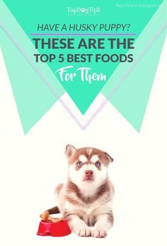 It's important to find the best dog food for husky puppies that will provide a feeding regime with sufficient nutrients to keep them healthy and happy. Top Dog Foods, Foods Bad For Dogs, Husky Dog Food, Husky Puppy, Best Puppy Food, Best Dry Dog Food, Siberian Husky Names, Can Dogs Eat, Dog Care