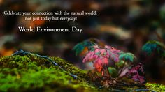Take a pledge to nurture and care for the Environment on the occasion of #WorldEnvironmentDay!