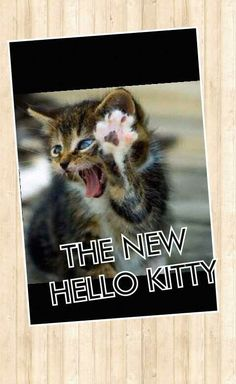 The new hello kitty lol Hello Kitty, Lol, Cats, Funny, Animals, Gatos, Animales, Animaux, Funny Parenting