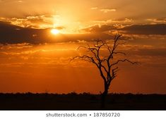 Image result for namibia scenery caprivi pictures