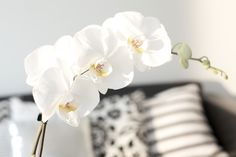 http://mykeminutter.blogspot.no:   Love orchids.