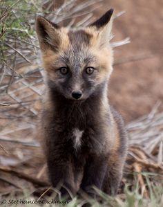 ☀cross fox kit