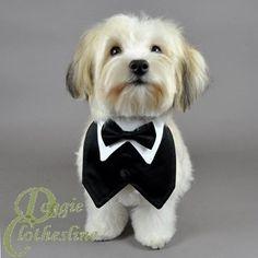 Dog Tuxedo Vest w/ Black Bow Tie (Small: Neck 12-14 inches)