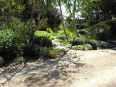 Image result for australian native garden design