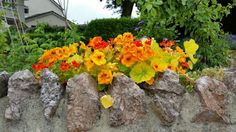 Flowers planted on top of wall