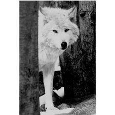 Lone Western Wolf Metal Art