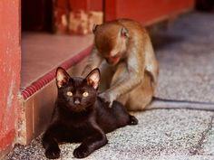 cat & monkey in Kuala Lumpur, Malasia