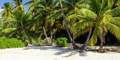 En läcker strandbild från Punta Cana i Dominikanska republiken.