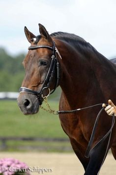 Quarter horse - Love me some quarter horse! It's fun to fly!