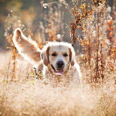 Pet Snacks Braces Cost, Pet Treats, Outdoor Settings, Nature Images, Dog Photography, Pet Store, Habitats, Fur Babies, Cute Dogs