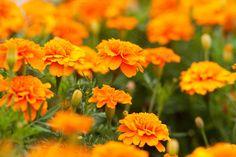 Flowers by TalyaPhoto on @creativemarket
