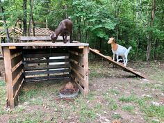 DIY Goat Playhouse & Shelter - The Little Frugal House Goats love to climb, jump, and play. So, we built a DIY goat playhouse so they can do just that! We used free scrap wood! I'll show you how we built it. Chicken Shelter, Sheep Shelter, Goat Shelter, Horse Shelter, Shelter Architecture, Goat Fence, Goat Playground, Playground Ideas, Outdoor Cat Shelter