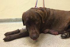 Dog shot in the head twice, survives - Good4Utah.com