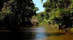 Parque Nacional Natural Río Puré | Parques Nacionales Naturales de Colombia