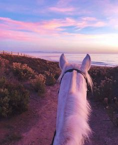 That's what life is all about 💜 - # dream # it # is # life - Pferde - Animals Cute Horses, Pretty Horses, Horse Love, Beautiful Horses, Animals Beautiful, Horse Girl, Cute Baby Animals, Animals And Pets, Funny Animals