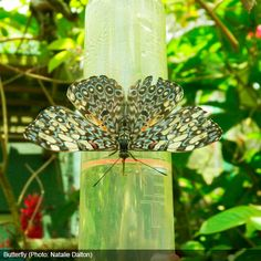 """Over 800 species of butterflies are housed in a special """"mariposario"""" at the Cali Zoo."""