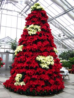 Design your 10 ft Poinsettia Trees! Reserve yours now for Christmas 2012!