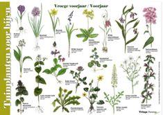 Plants, Scouting, Google, Biology, Balcony, Plant, Planets