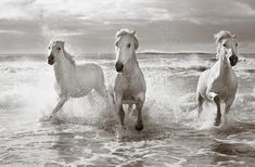 Run White Horses II Photograph by Tim Booth