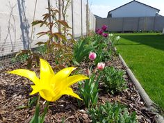 Jarný aspekt. Cibuľky sú dôležitou súčasťou trvalkových záhonov. Plants, Plant, Planets