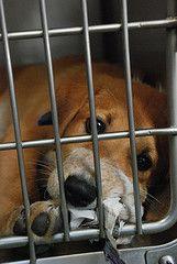 Help raise Guiding Eye Puppies!!!!!