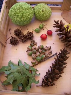 Hands-on activities that explore science, math and reading outside this fall! #autumn #stem