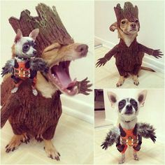 I am Groot - http://www.seethisordie.com/animalsbeingbros/i-am-groot/ #animals #cats #funny #fun
